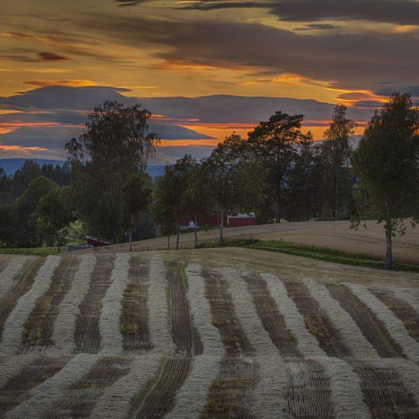 022 - Etter innhøsting ved Østby