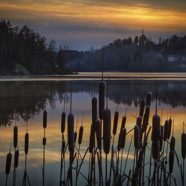 029 - Desemberkveld ved Årungen