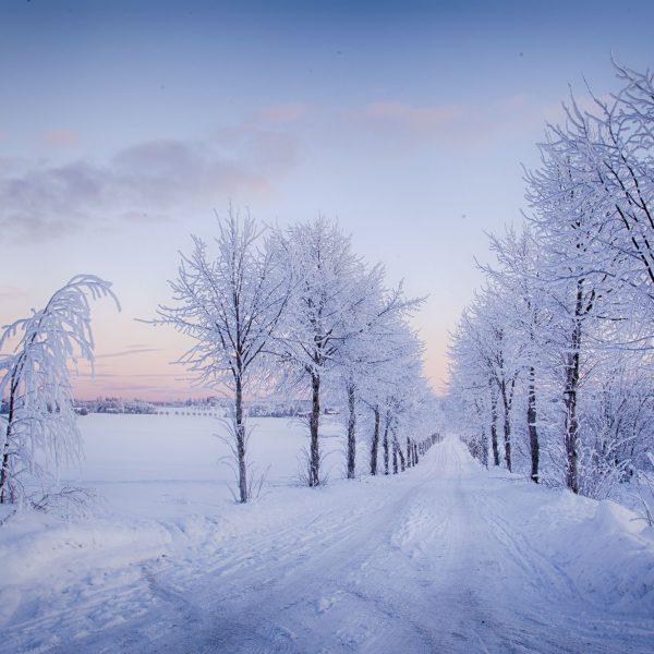 030 - Kald vinter